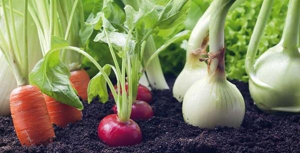 Cultivos de vegetales