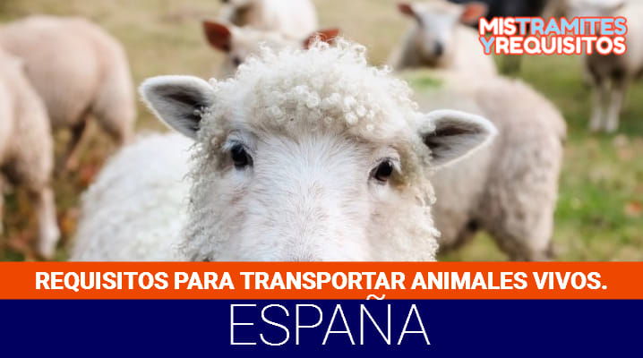 Requisitos para transportar animales vivos