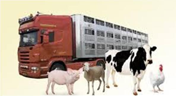 REQUISITOS PARA TRANSPORTAR ANIMALES VIVOS EN ESPAÑA.