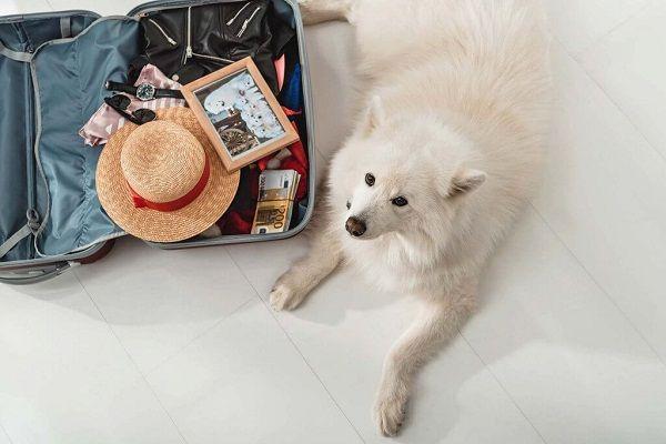 requisitos para viajar con tu mascota