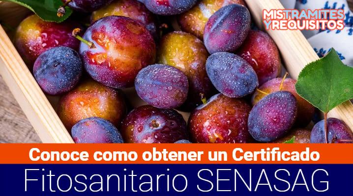 Conoce como obtener un Certificado Fitosanitario de Exportación SENASAG