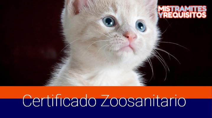 Conoce como obtener un Certificado Zoosanitario de exportación