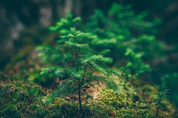 registro autorizacion ambiental