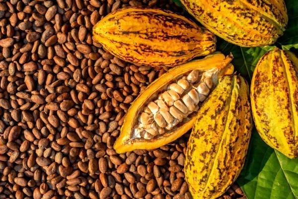Certificado de origen Ecuador cacao